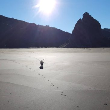 expanse of sand and dog